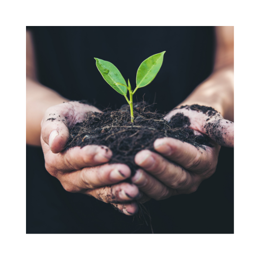 Rohling-lead nurture